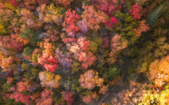 Leaves start off with green hues from a molecule called chlorophyll, then gradually change to warmer colors along with the decreasing amount of sunlight.